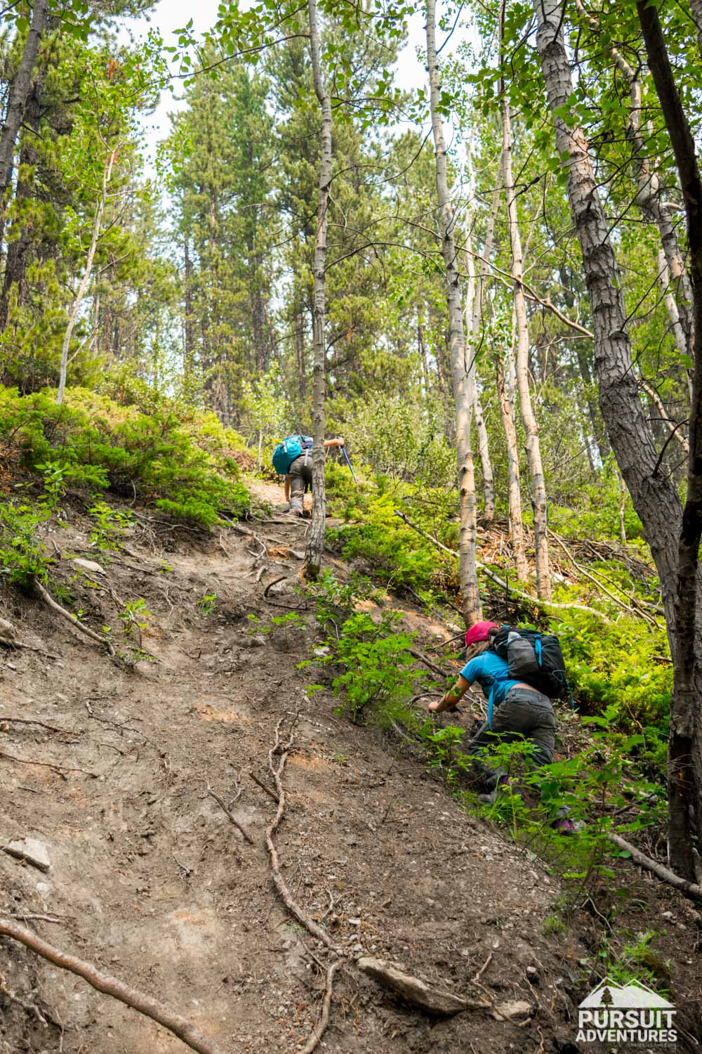 A steeper option back from Whitegoat Falls